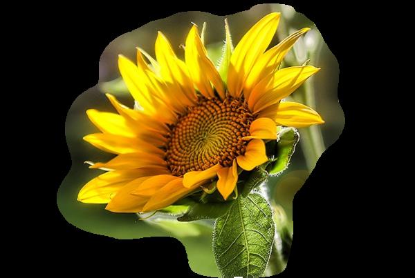 grand pot de fleur